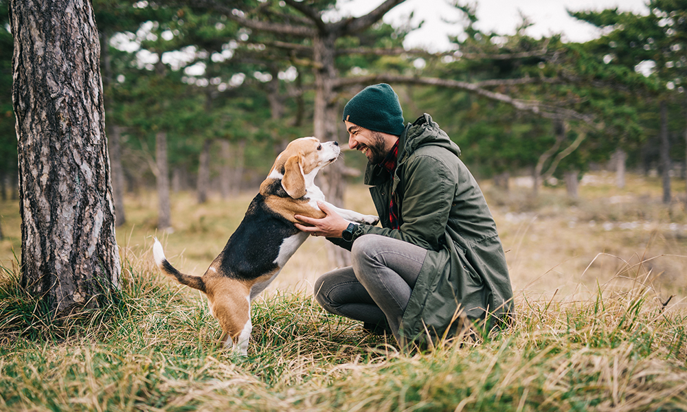 Who Is The Alpha Dog Of Your Life?